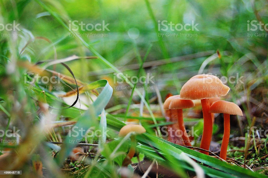 Mushrooms in the forest. Macro. stock photo