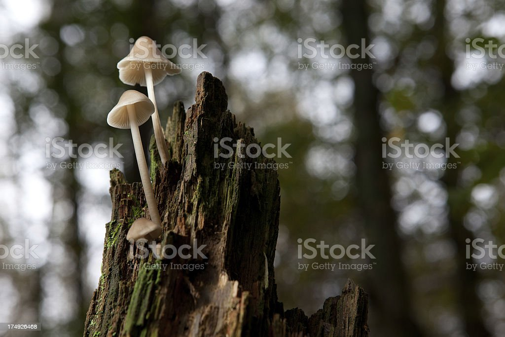 Mushrooms in the forest stock photo