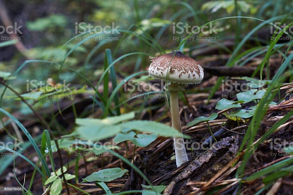 Cogumelos na floresta. foto de stock royalty-free