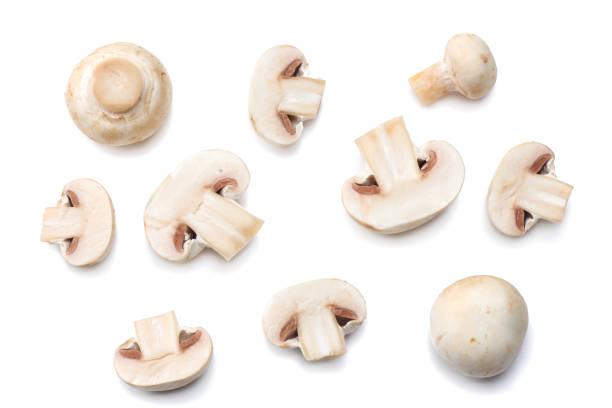 mushrooms isolated on white background. top view - cogumelos imagens e fotografias de stock