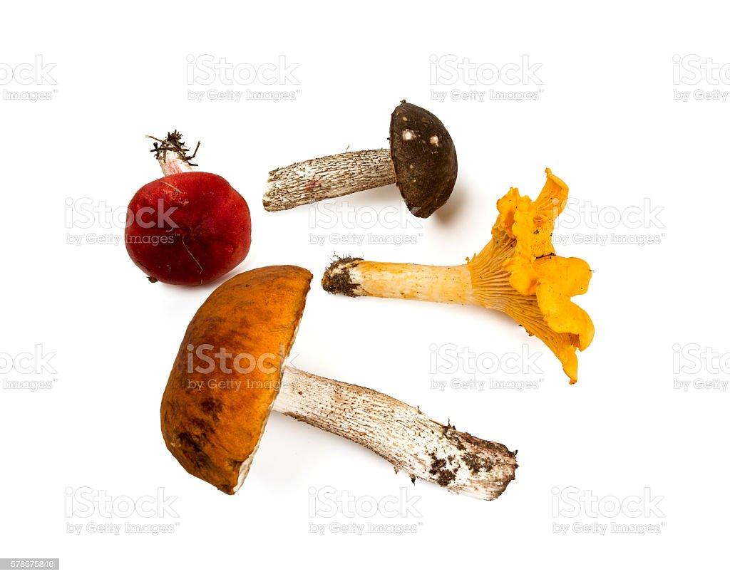 mushrooms isolated on white stock photo
