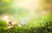 istock Mushrooms & Moss 1303317282