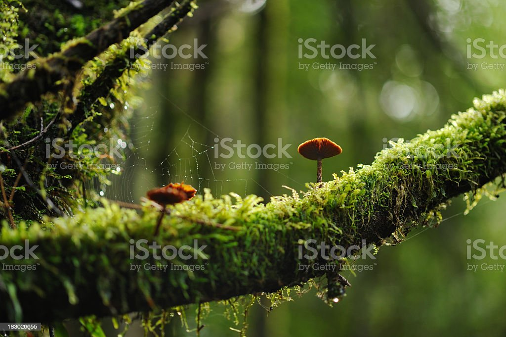Mushrooms on a mossy branch in the woods stock photo