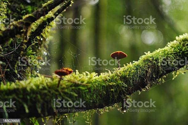Photo of Mushrooms on a mossy branch in the woods