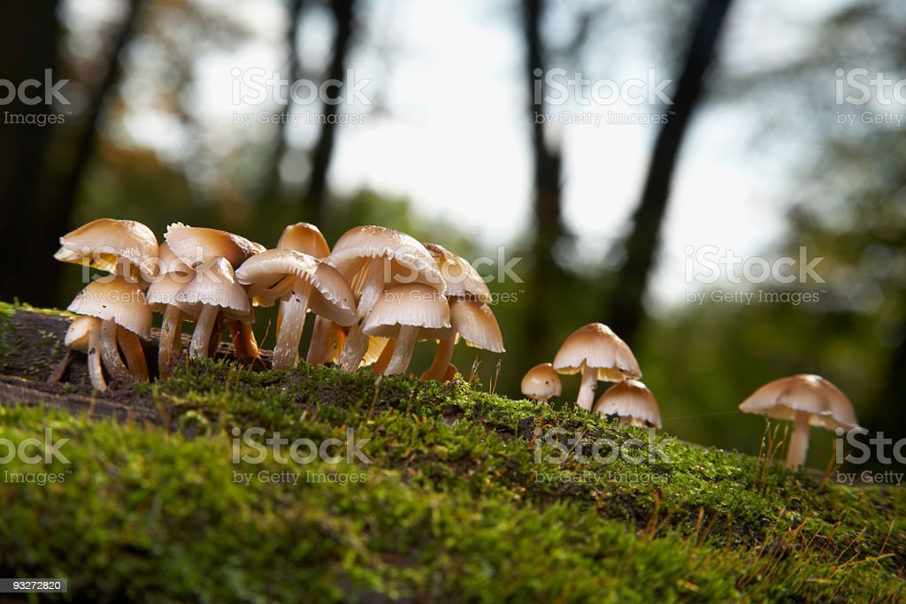 Mushrooms on a Mossy Log stock photo