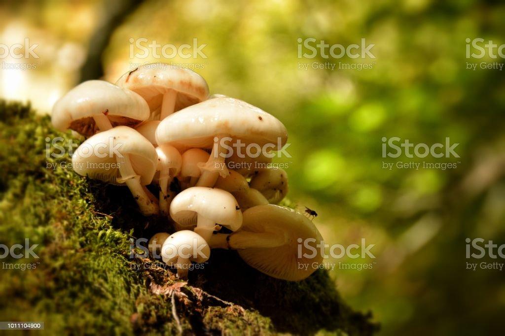 Hongos en un árbol - foto de stock