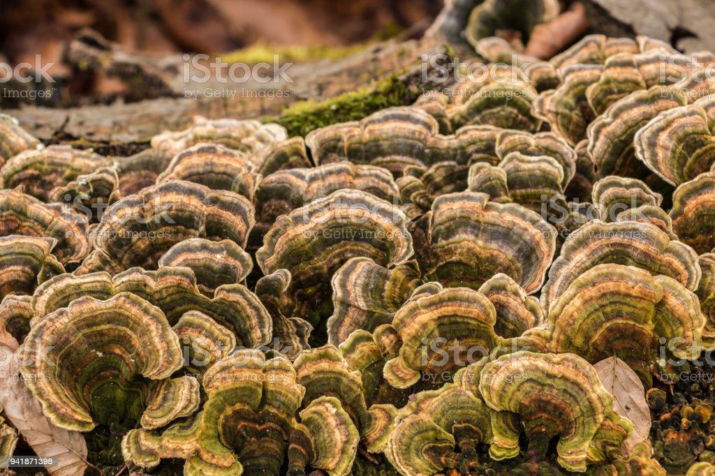 Pilze auf einem Baumstamm mitten im Wald – Foto
