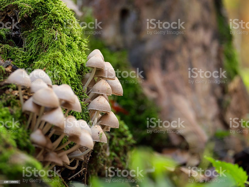 Mushrooms on a trunk stock photo