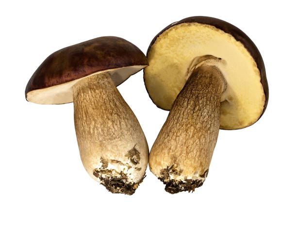 funghi su sfondo bianco - icon set healthy foto e immagini stock