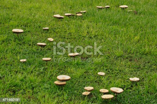 A ring of mushrooms known as a