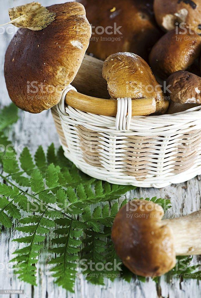 Mushrooms on the basket stock photo