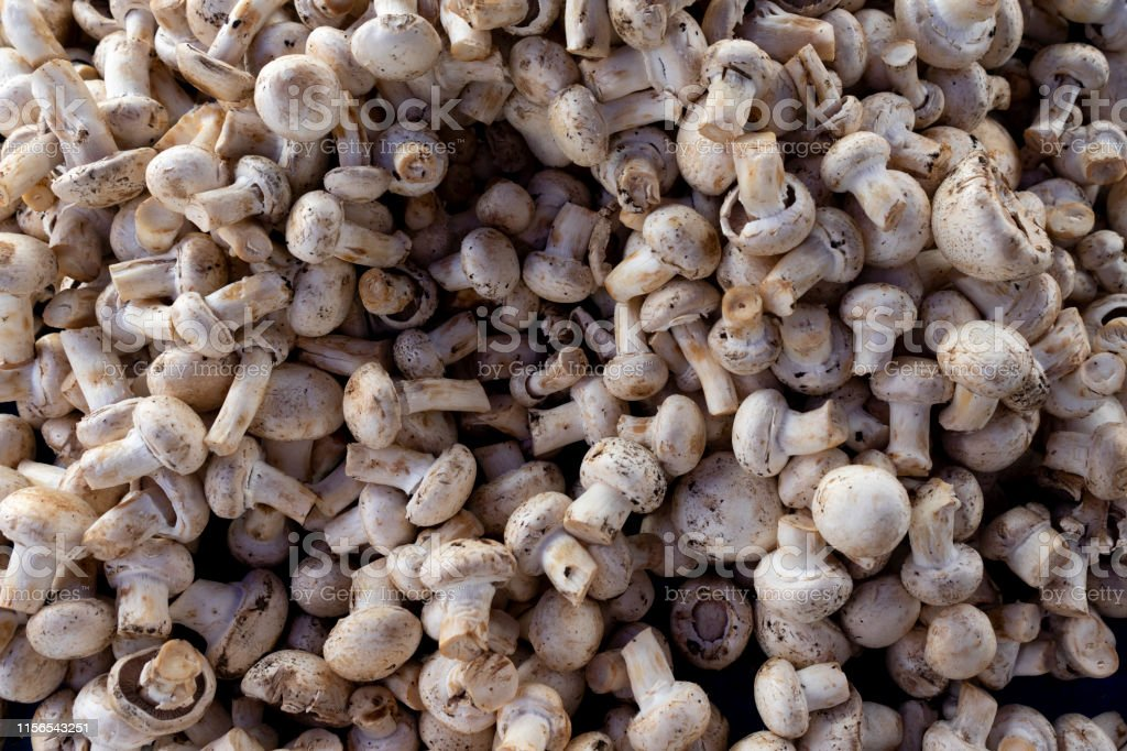 Mushrooms on the market booth Close up shot of mushrooms on the market booth. Abstract Stock Photo