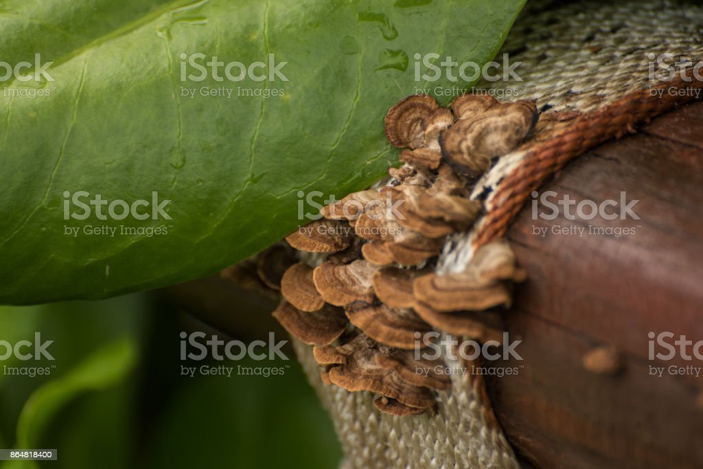 Mushrooms on the wooden hand rail. stock photo