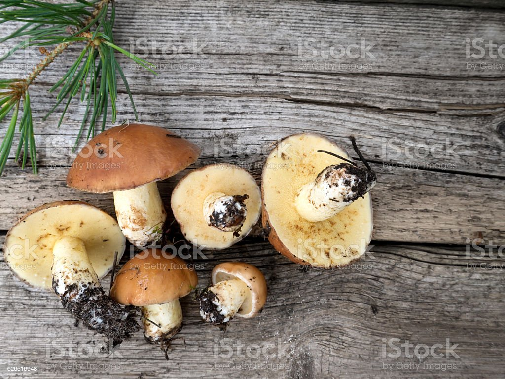 Mushrooms on the wooden planks stock photo