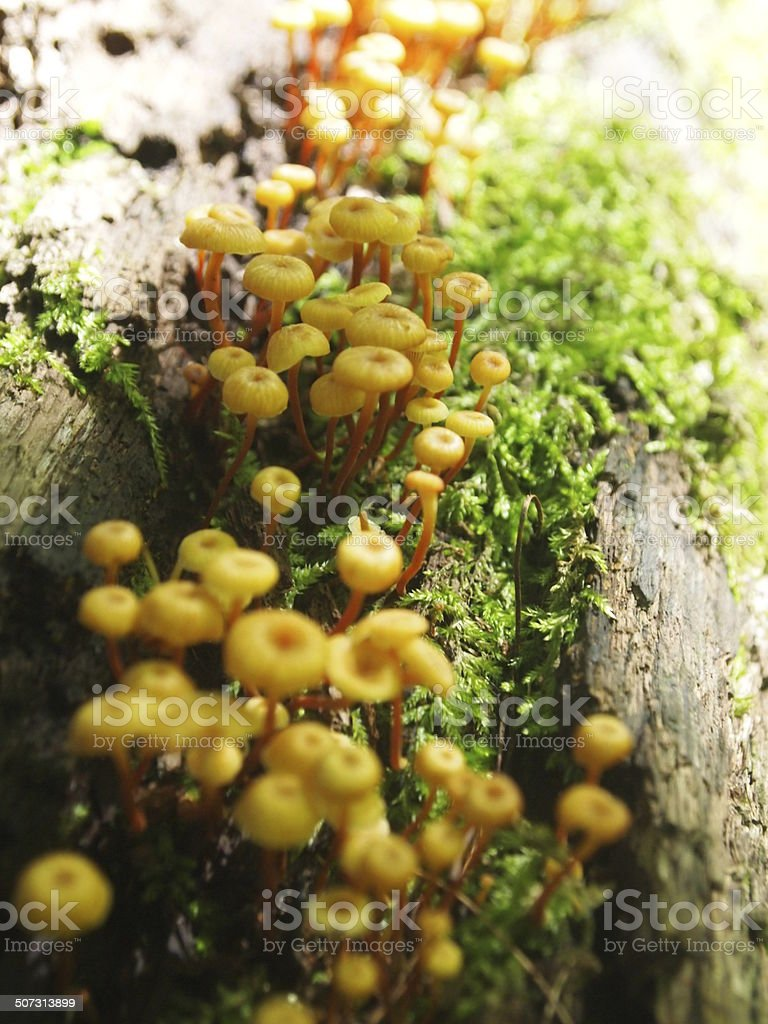 Mushrooms on Tree Trunk stock photo