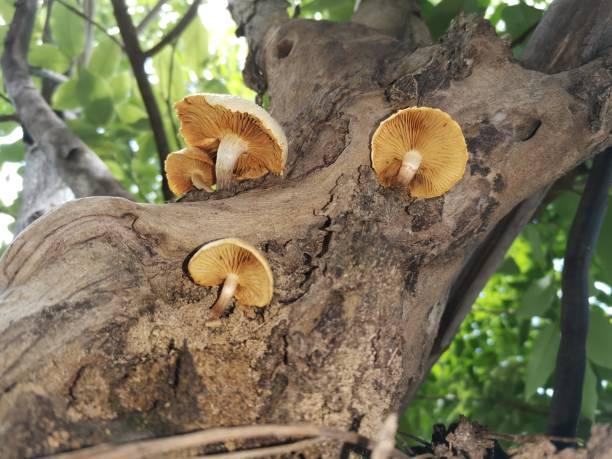 Mushrooms on trees stock photo