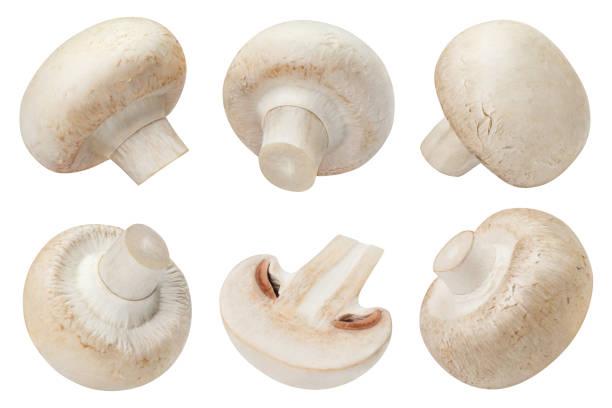 mushrooms on white - cogumelos imagens e fotografias de stock