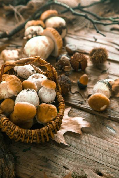 Champignons sur bois - Photo