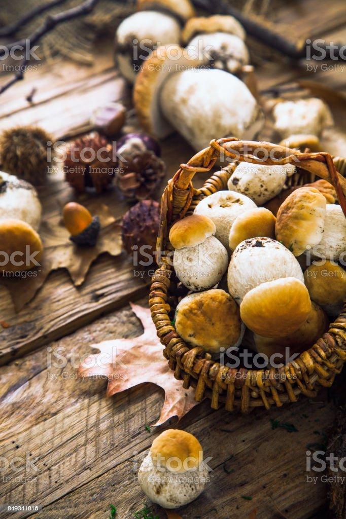 Mushrooms on wood stock photo
