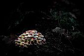 Mushrooms society i a dark enviroment struck by sun light
