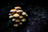 Mushrooms society in a dark enviroment struck by sun light