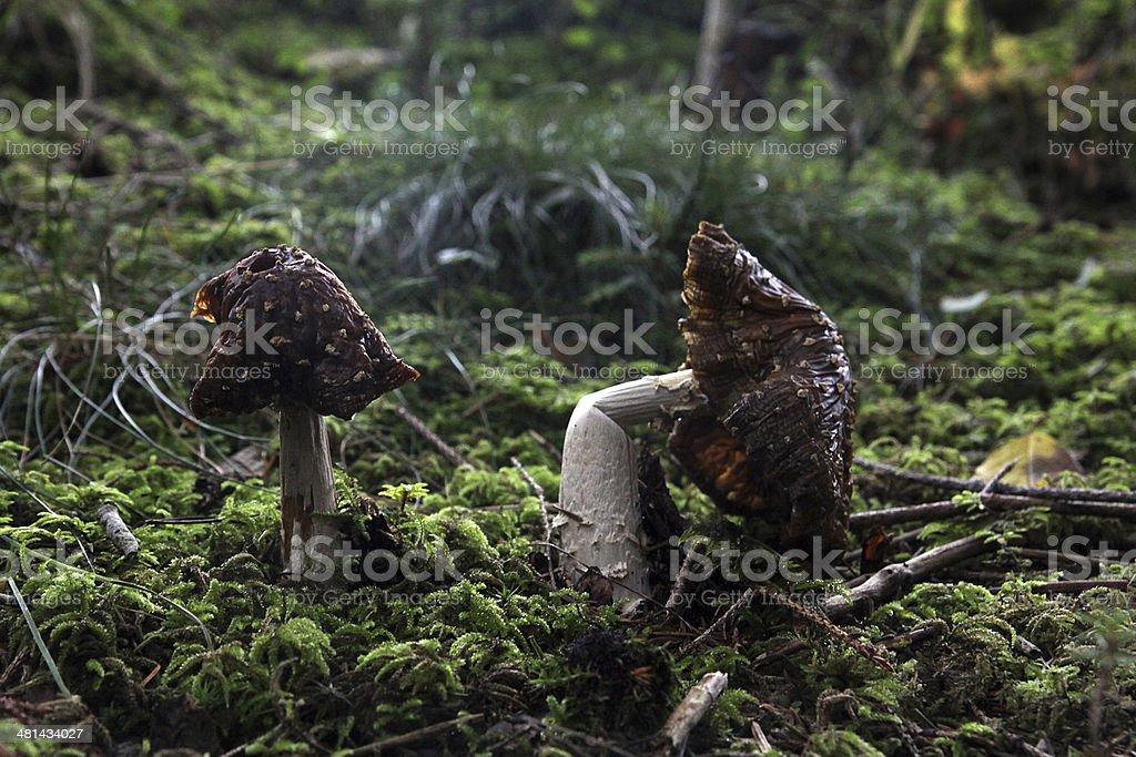 mushrooms stock photo