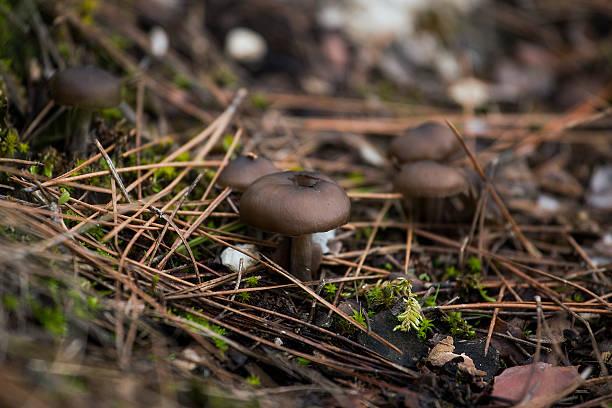 mushrooms - byakkaya stok fotoğraflar ve resimler