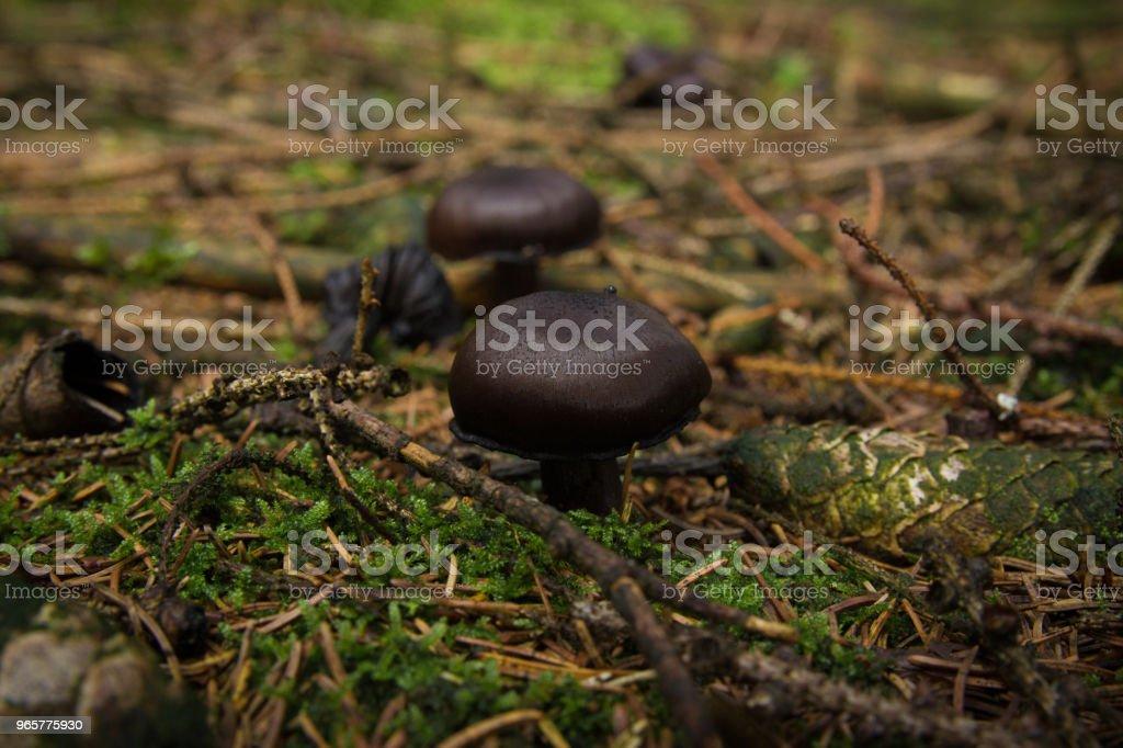 mushrooms. - Royalty-free Autumn Stock Photo