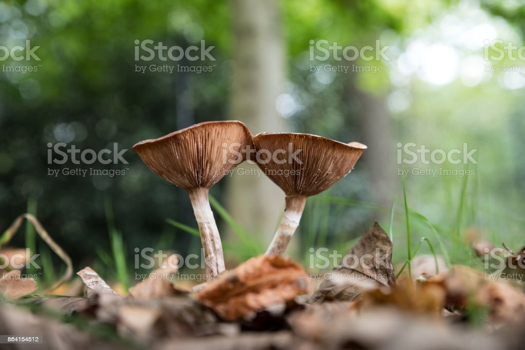 mushrooms with gills seen from underneath royalty-free stock photo