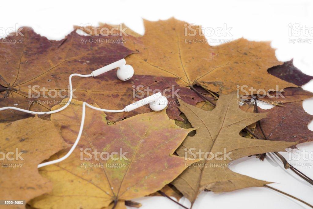 Music autumn abstraction. stock photo