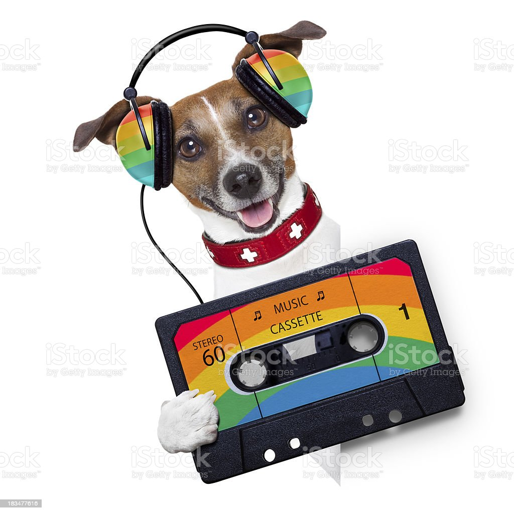 music dog royalty-free stock photo