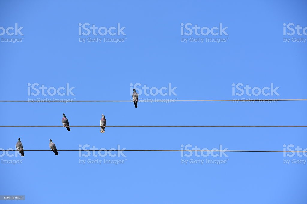 Music of Nature stock photo