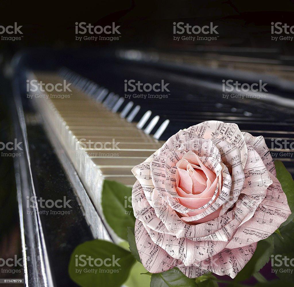 Fotografía De Símbolo De La Música Hermosa Rosa Rosa Con Nota En El