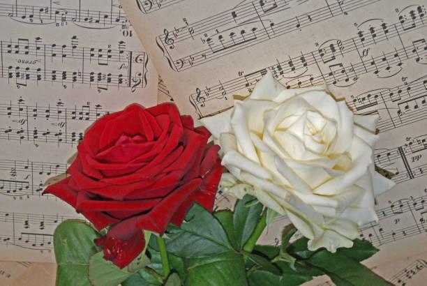 Musikaliska rosor bildbanksfoto