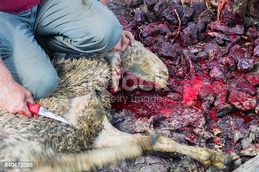 istock Muslim butcher man cutting a sheep for Eid Al-Adha (Sacrifice Feast). 840473268