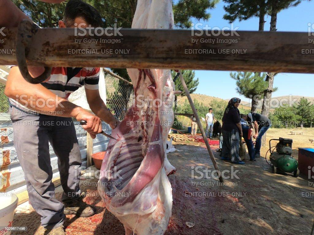 Muslim people cutting a sheep for Eid Al-Adha (Sacrifice Feast). stock photo
