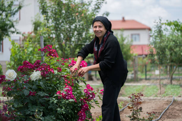 senior moslimvrouw tuinieren in achtertuin - turkse etniciteit stockfoto's en -beelden