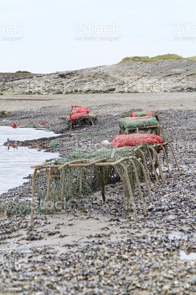 mussel collecting on shoreline stock photo