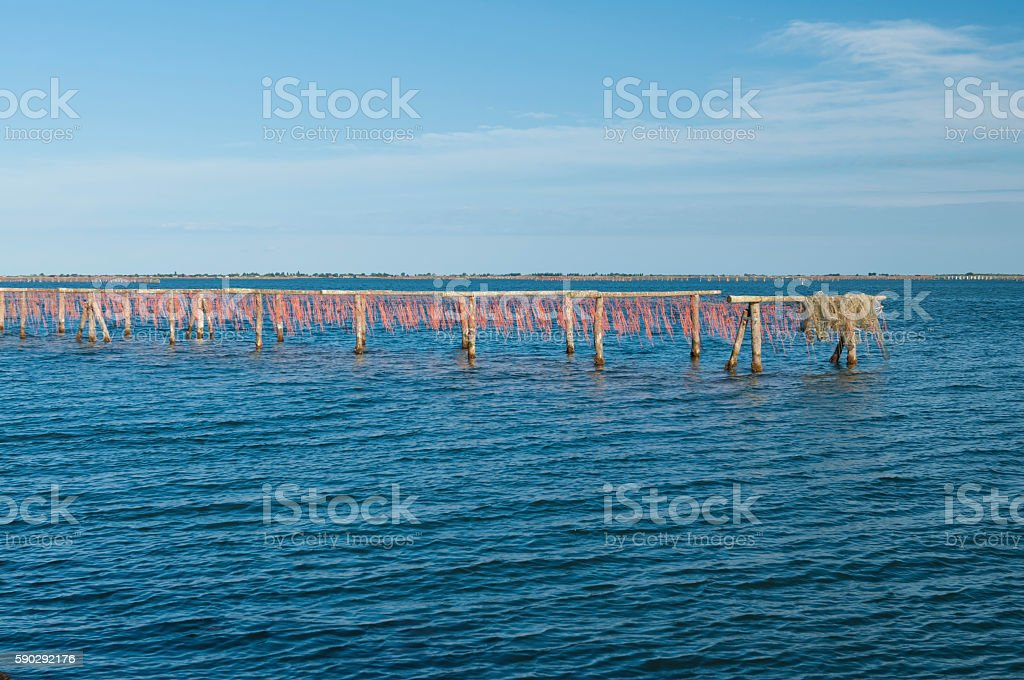 Mussel cultivation at Scardovari lagoon, Rovigo, Italy royaltyfri bildbanksbilder