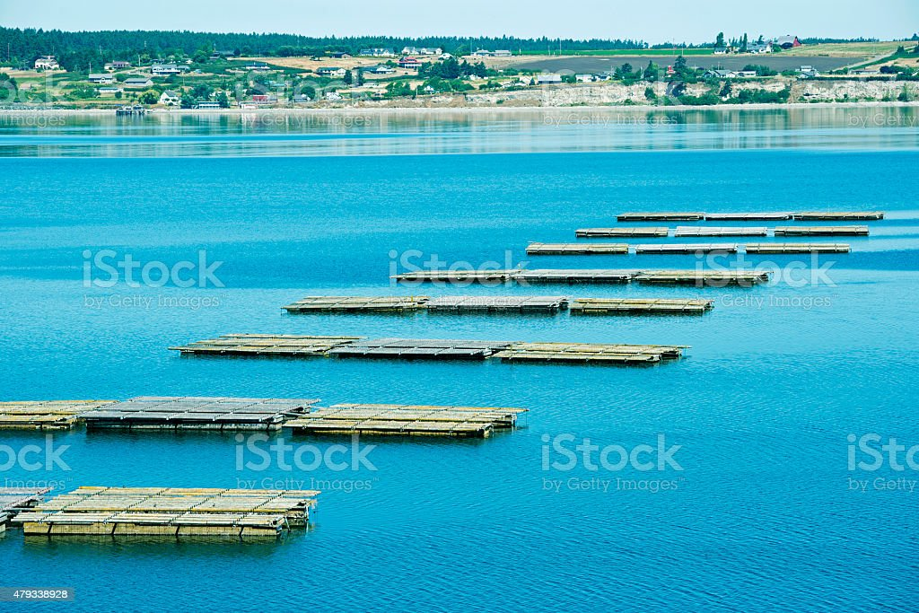 Mussel rafts in Penn Cove of Whidbey Island WA stock photo