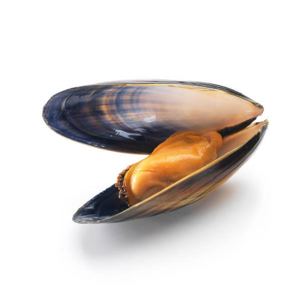 moule simple avec shell - moules photos et images de collection