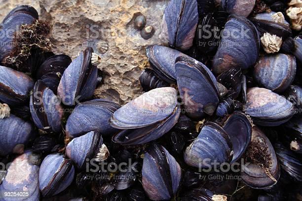 Photo of Mussels Closeup