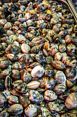 Mussels for sale, at fish market in Catania