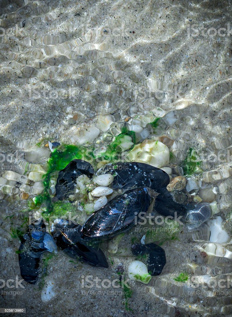 Mussels  in beach water stock photo