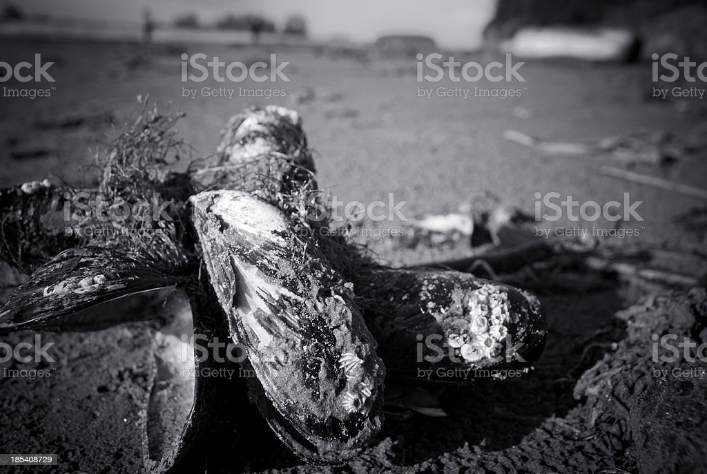 Mussels on Beach stock photo