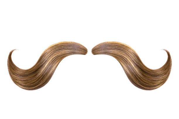 Mustache made from natural hair isolated on white Made of brown ponytail isolated on white mustache stock pictures, royalty-free photos & images