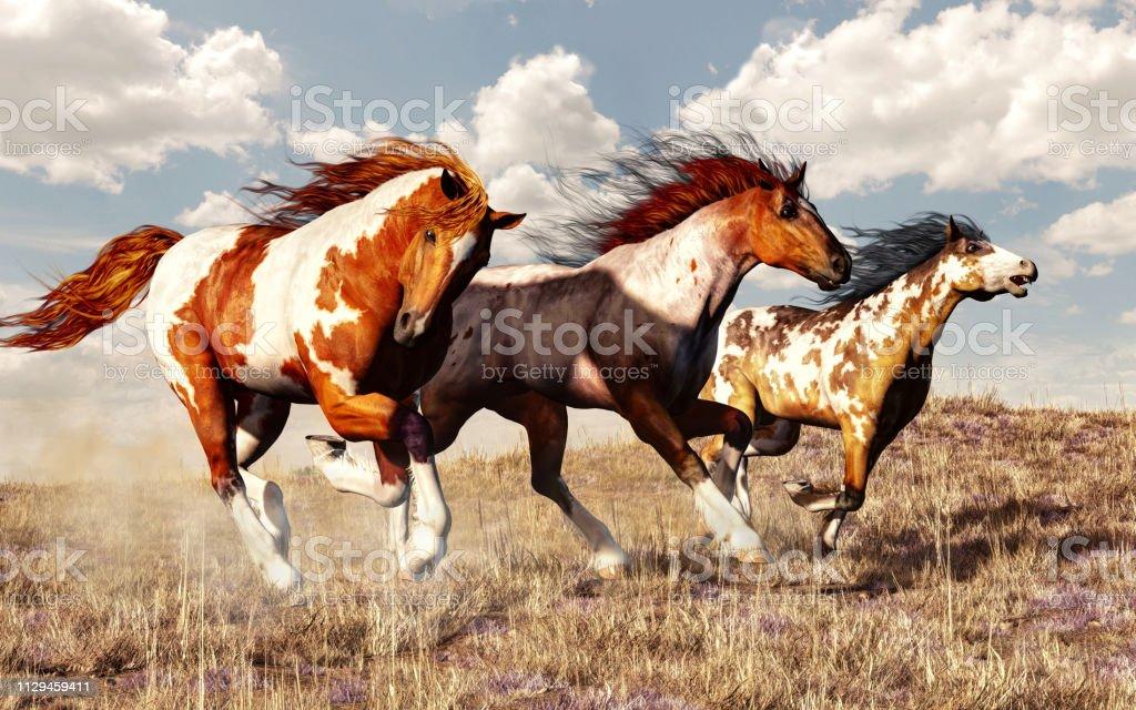 野馬比賽 - 免版稅在野外的野生動物圖庫照片