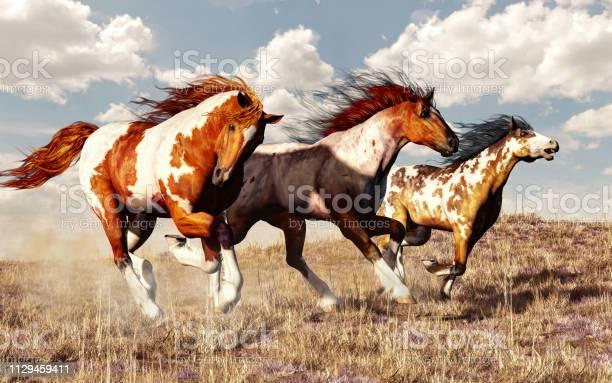 Mustang race picture id1129459411?b=1&k=6&m=1129459411&s=612x612&h=jnubav3zoeef nec6cy4yrvzogbpdh0s tocovnmcpg=