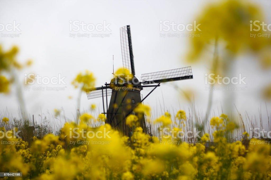 Mustard and windmill stock photo