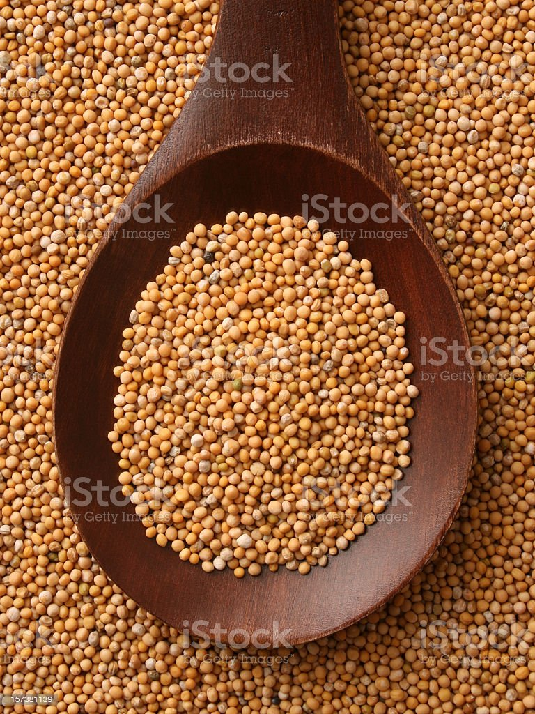 Mustard grains stock photo